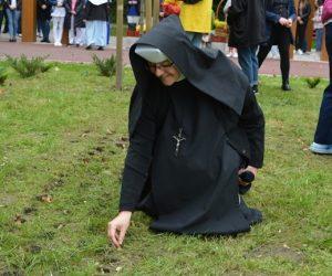 W Miechowie posadzono żonkile – symbol idei hospicyjnej